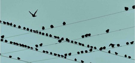 مطالعه موردی: به الگوریتم اعتماد کنید یا به غریزهی خودتان؟